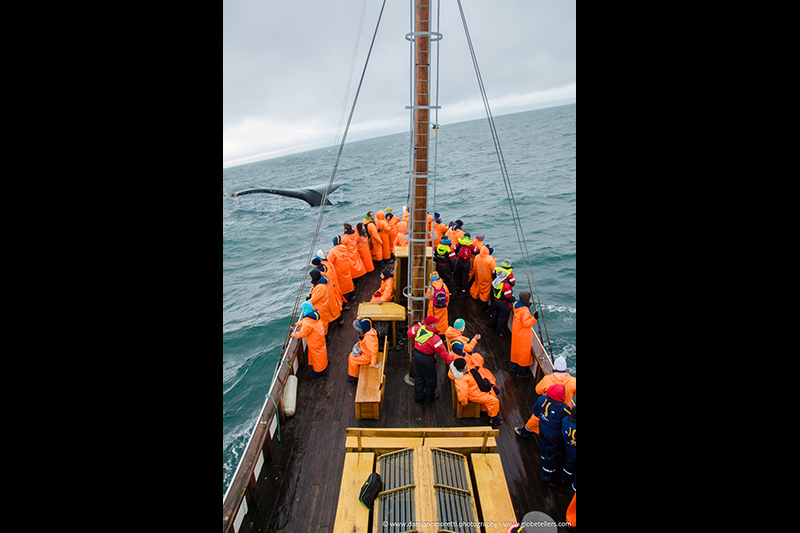damianildo9 photography - humans - whale watching in iceland
